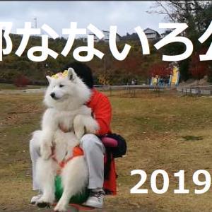 サモエドさくら彩都なないろ公園2019.12.8