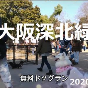 サモエド さくら無料ドッグラン東大阪深北緑地2020.1
