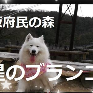 サモエド さくら星のブランコ/大阪府民の森2020.1.19