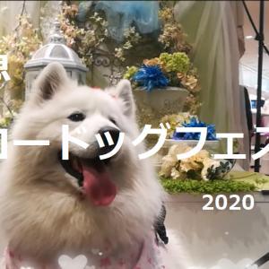 サモエド さくら阪急ハロードッグフェスタ2020 愛犬愛猫とのBEAUTY&HEALT
