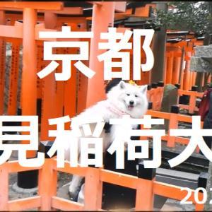 サモエドさくらわんこと参拝 伏見稲荷大社 スズメの丸焼き食べたよ(*^^)v