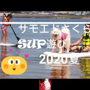 サモエド さくらSUP遊び2020夏 GoProデビュー