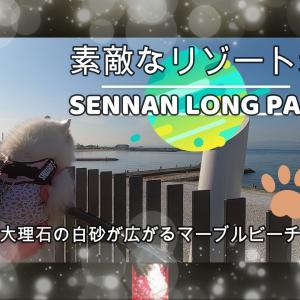 サモエド さくらOSAKA泉南りんくう公園 2020.11
