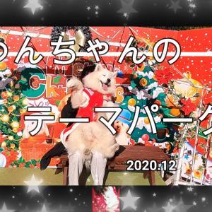 サモエド さくら可愛いわんちゃんいっぱい✨わんわん動物園2020.12
