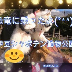 サモエドさくら伊豆シャボテン動物公園2020.12.6