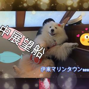 サモエドさくら遊覧船で海中散歩 愛犬と過ごせる道の駅 伊東マリンタウン2020.12