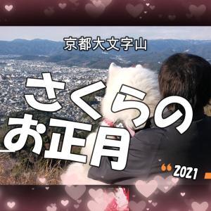 サモエドさくらさくらのお正月✨大文字山登山・初詣2021
