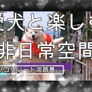 サモエドさくら愛犬と楽しむ癒しの非日常空間2021.✨✨✨