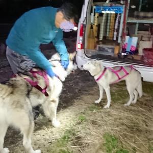 野辺山へ… 数日中に犬ぞりレース詳細発表です