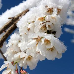 映画『春の雪』あらすじ・感想・レビュー