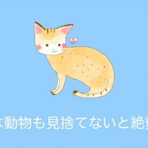日本政府が「台風時に猫の島のネコを避難させたこと」がタイで話題に!続々と感謝の声が!【タイ人の反応】