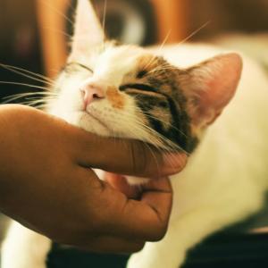 日本で「法要中の僧侶にネコが甘えまくるタイの動画」が可愛すぎると話題に!これは修行僧でも耐えられない!【タイ人の反応】