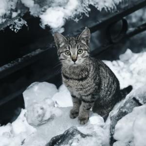 日本の「冷たいの食べてキーンとなったネコ」が可愛すぎる!【タイ人の反応】