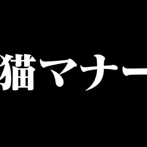 日本語の「猫マナー」が傾いて見えると話題に!【台湾人の反応】