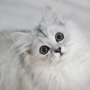 日本の木からネコのアレみたいなの生えてるwww【台湾人の反応】
