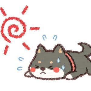 日本の「交通ルールを守る柴犬」が可愛くて笑ってしまうw【台湾人の反応】