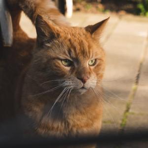 日本の「ニンゲンに心を許さない野良猫集団のおにぎり」が可愛すぎて食べられない!【台湾人の反応】