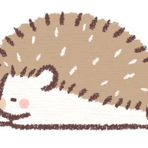日本の「野生を忘れたハリネズミ」が可愛すぎる!【タイ人の反応】