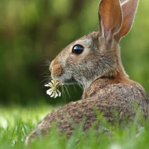 日本人が「エアコン配管がチュロス食ってるウサギみたい」と絵に描いた結果→的確すぎて不覚にも爆笑した!【台湾人の反応】