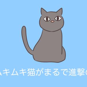 日本の「筋肉ムキムキ猫」がまるで進撃の巨人だと話題にwww【台湾人の反応】