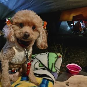 3連休前日の丸山県民サンビーチで愛犬とソロキャンプ