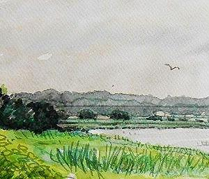 梅雨空の手賀沼東端
