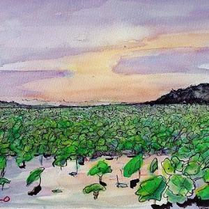手賀沼の蓮群生地