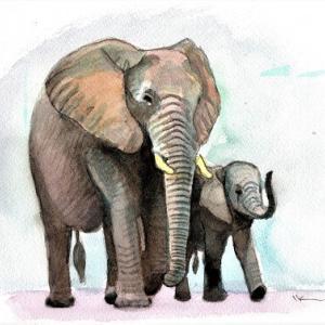 ゾウの親子