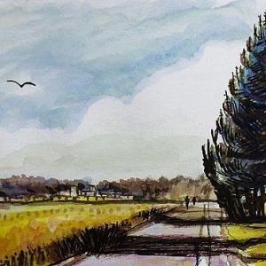 手賀沼の遊歩道