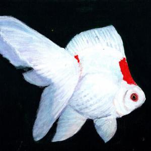 金魚 - 琉金