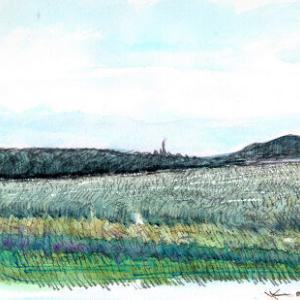 手賀沼の葦原