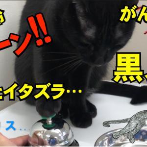 黒猫 黒スケ 呼び鈴チーン ちょっとイタズラ