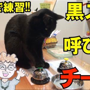 黒猫の黒スケ 呼び鈴チーン 受付で練習