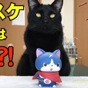 黒猫の黒スケ  初対面
