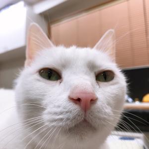 白猫のカクさん 写真はお嫌い