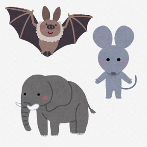 授業12. LHRアンケート「この人を動物にたとえるなら何ですか?」