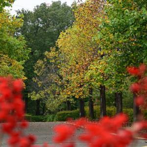 秋の智光山公園