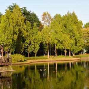 秋の彩の森公園