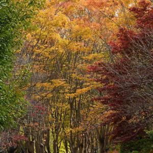 智光山公園の紅葉