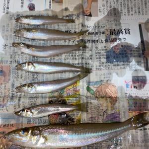 9月19日 再び茂木近郊 キス釣り 両親編