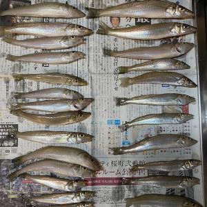 9月12日 茂木近郊 再びキス釣り