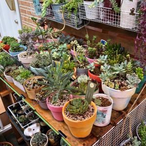 雨の合間の庭仕事(*≧∀≦*)
