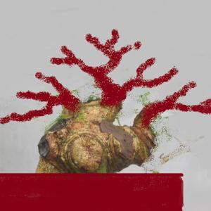 有象無象の山モミジの夏取り木