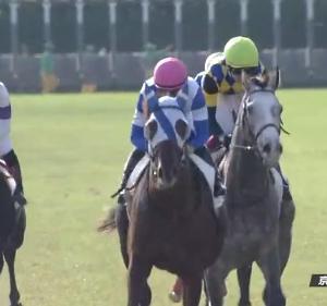 【19/11/10 レース評】ショウリュウイクゾ 新馬戦以来の2勝目を京都芝2400mで飾る
