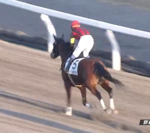 【20/01/11 レース評】エイシンポジション 5馬身差の圧勝で2勝目。オルフェーヴル産駒は今日3勝目