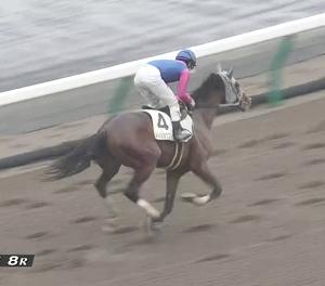 【21/01/23 レース評】メイショウコジョウ (1勝クラス)を勝利し2勝目