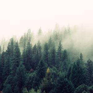 たまには山に泊まって明け方の空気に身を浸したい
