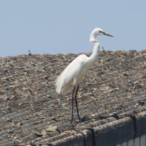 ミラーレス一眼カメラで撮影した5月の野鳥たち
