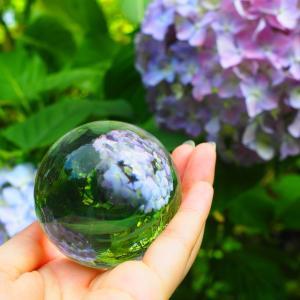 水晶玉(レンズボール)を使って紫陽花の撮影
