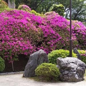 近所で春から初夏の花を愛でる